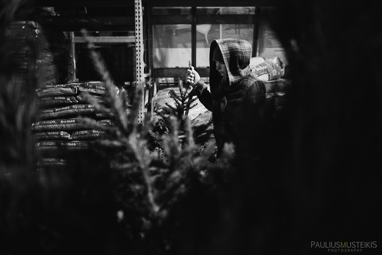 christmas_tree_that_time_of_the_year_in_Madison_Paulius_Musteikis_Photography-2
