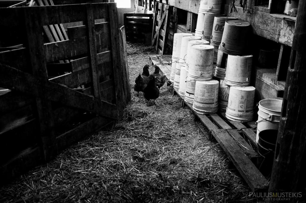 VTV_ranch_South_Dakota_ road_trip_with_fuji_x-pro1_x100_silver_efex_pro_Paulius_Musteikis_Photography-0026