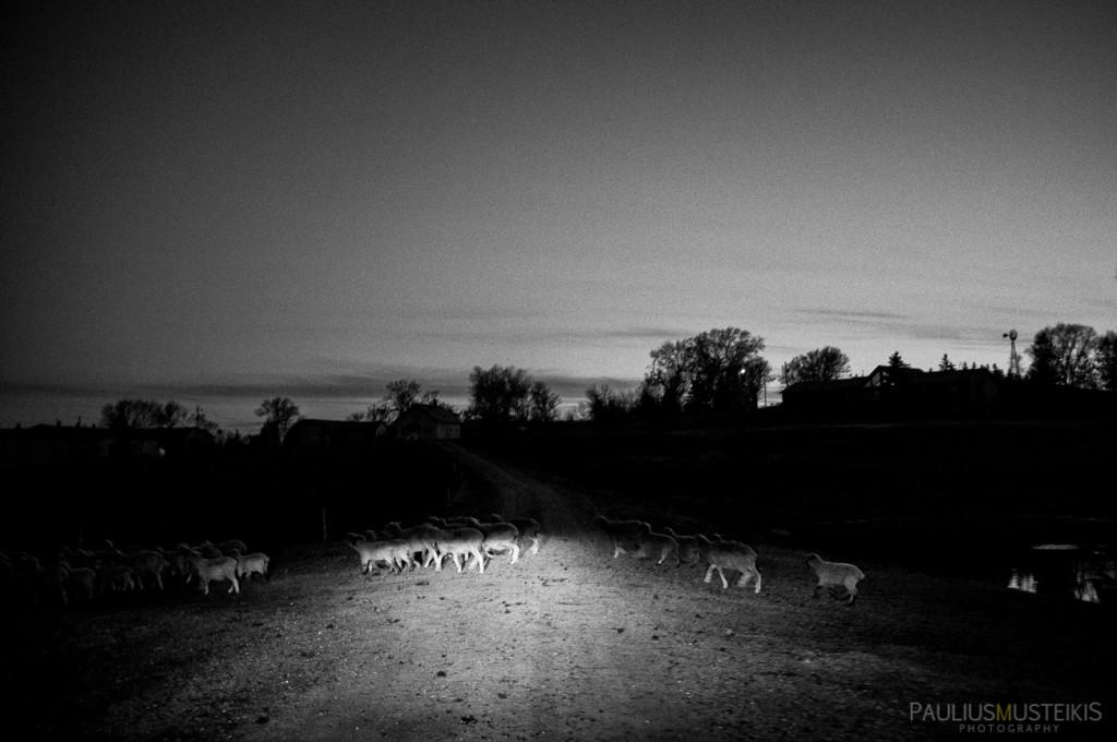 VTV_ranch_South_Dakota_ road_trip_with_fuji_x-pro1_x100_silver_efex_pro_Paulius_Musteikis_Photography-2